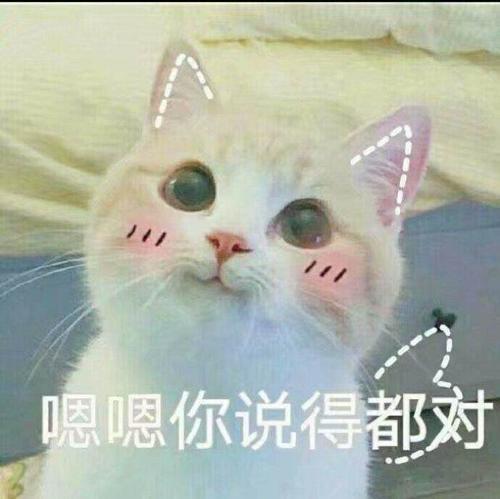 表情包 小猫