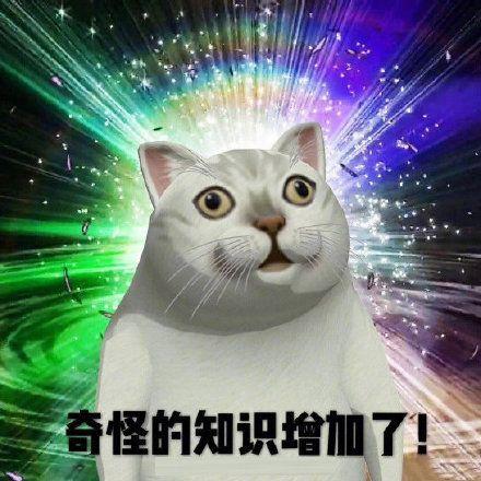 猫表情包抖音