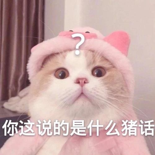 问号表情包可爱猫咪