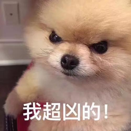狗狗超凶表情包