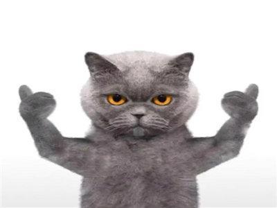 抖音猫表情包