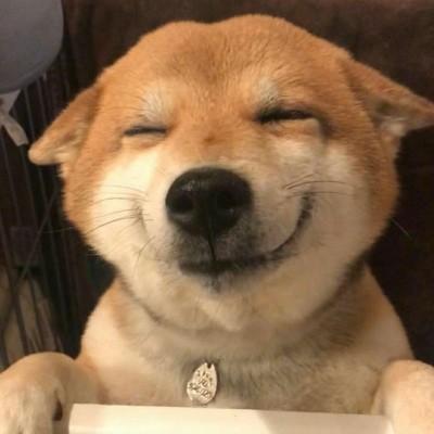 单身狗表情包柴犬