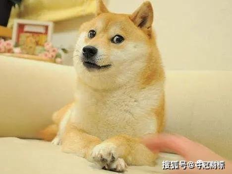 微信狗头表情包变种