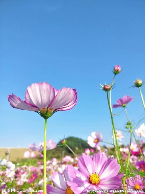 风景图片唯美 花朵