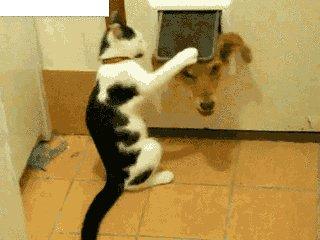 猫打狗表情包gif