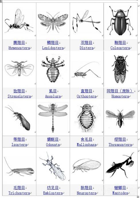 虫子图片大全大图