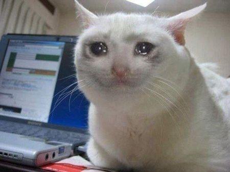 猫咪含泪表情包