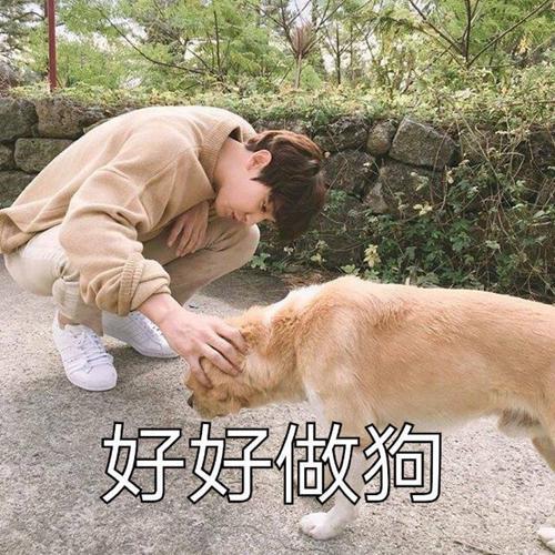 EXO狗狗表情包