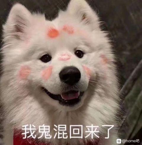 狗狗指人表情包