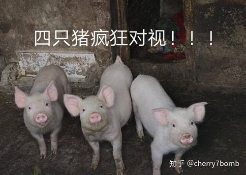 拍猪表情包