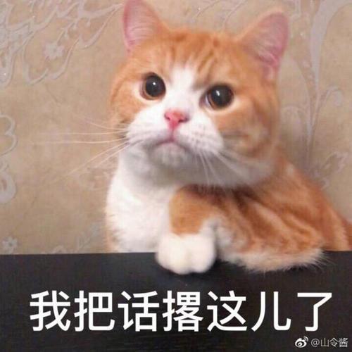 我就要猫咪表情包