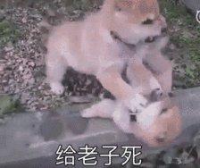 狗狗表情包gif搞笑