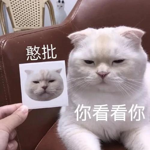 猫咪尾巴硬了表情包