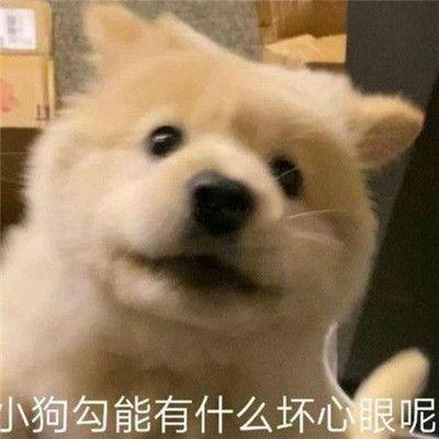 乐表情包小狗出处
