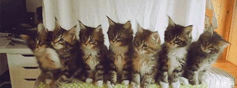 一群猫咪点头的表情包