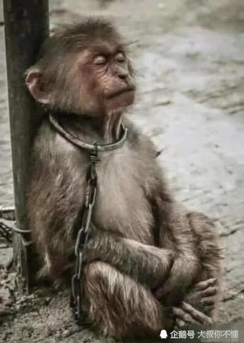 猴子很贱咧嘴笑表情包