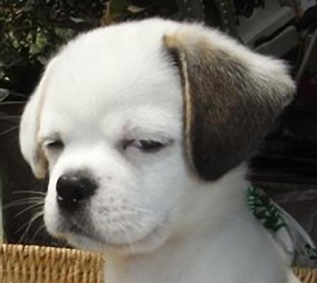 狗狗歪嘴笑表情包