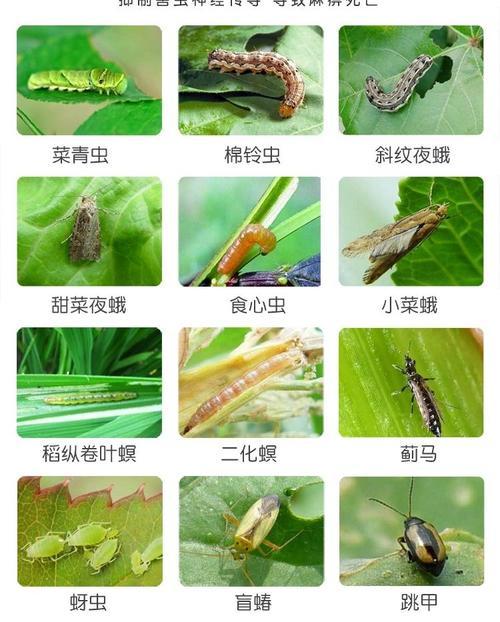 蔬菜虫子种类图片