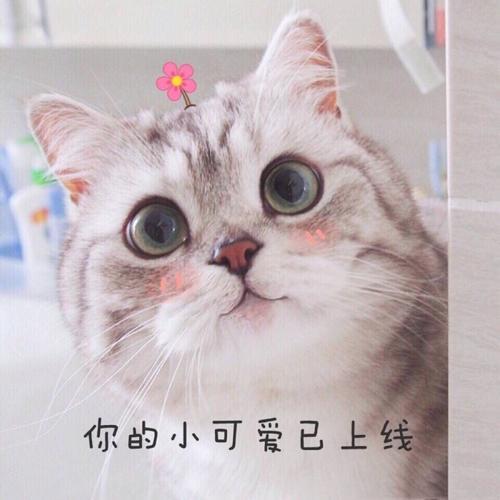 小可爱表情包 萌萌