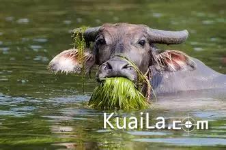 老牛吃嫩草的表情包